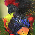 Lorikeet Lovers by Michelle Constantine