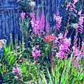 Los Osos Flower Garden by Dominic Piperata