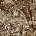 Lost Barn S by John Myers