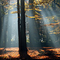 Lost In The Light by Roeselien Raimond