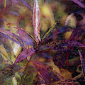 Lost Leaves Decorated In Purple 6003 Ldp_2 by Steven Ward