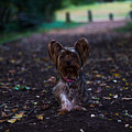 Lost Puppy by Saul Tavarez