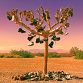 Lost Soles 3 by Dominic Piperata