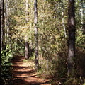 Lost Trail by John OBrien