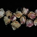 Lots Of Lost Glory by Randi Grace Nilsberg