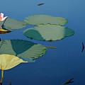 Lotus 1 by Sam Davis Johnson