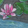 Lotus 2 by Brenda Stevens Fanning