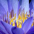Lotus 9 by Jijo George