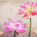 Lotus by Angela Doelling AD DESIGN Photo and PhotoArt
