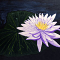 Lotus Blossom At Night by Patricia Griffin Brett
