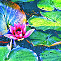 Lotus Blossom by Dominic Piperata