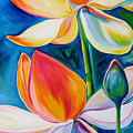Lotus Blossoming by Marcia Baldwin