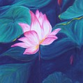 Lotus by Dina Holland
