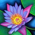 Lotus Divine by Minaz Jantz