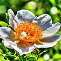 Lotus by Doc Hafferty