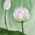 Lotus Emerging by Maria Langgle