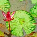 Lotus Flower Bloom In Pink 1 by Jeelan Clark