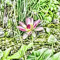 Lotus Flower Bloom In Pink 2 by Jeelan Clark