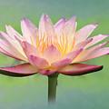 Lotus Flower by Lori Deiter