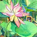 Lotus Flower by Marionette Taboniar