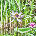 Lotus Flower On The Water by Jeelan Clark