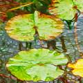 Lotus Flowers Leaves by Jeelan Clark