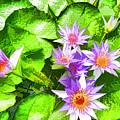 Lotus In Pond by Jeelan Clark