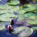 Lotus Lake by Shahzad Hamid