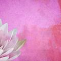 Lotus by Mark Rogan