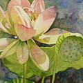 Lotus by Marlene Gremillion