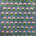 Lotus Pichwai Miniature by The Kaarigars