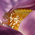 Lotus Seed Pod by Rande Cady