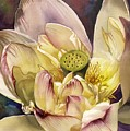 Lotus Watercolor by Alfred Ng