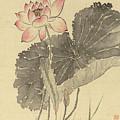 Lotus by Yang Jin
