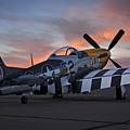 Lou Iv At Sunset by Rick Pisio