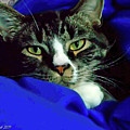 Louis And The Snuggy by Joan  Minchak