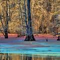 Louisiana Bayou by Diana Mary Sharpton