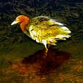 Louisiana Heron by David Lee Thompson