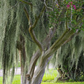 Louisiana Moodiness by Rhonda McDougall