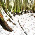 Louisiana Snowfall by Andy Crawford