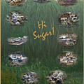Louisiana Sugar Cane Poster 2008-2009 by Ronald Olivier