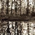 Louisiana Swamps 3 by Sally Mellish