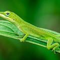 Lounge Lizard by Brad Boland