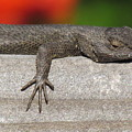 Lounge Lizard by John Irons