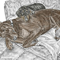 Lounge Lizards - Doberman Pinscher Puppy Print Color Tinted by Kelli Swan
