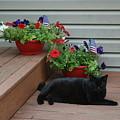 Lounging Black Cat by Brad Nellis