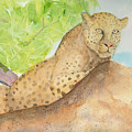 Lounging Leopard by Vicki  Housel