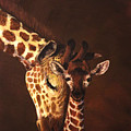 Love And Pride Giraffes by Sean Conlon