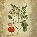 Love Apple Botanical  by Karla Beatty