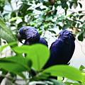 Love Birds by Anup Kumar Chalamalla
